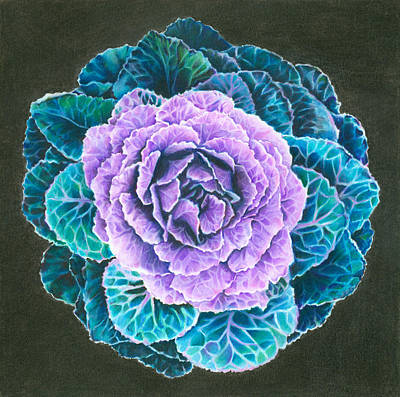 Cabbage Drawing - Ornamental Cabbage by Mandy Robertson