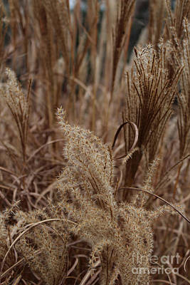 Ornamental Grass Art Print by Arlene Carmel