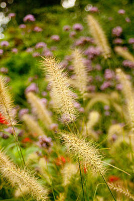 Photograph - Ornamental Grasses by Kristia Adams