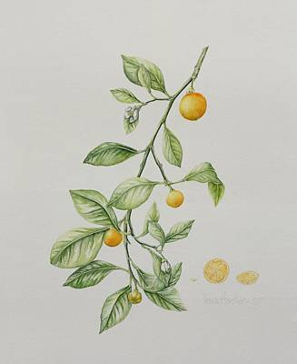 21st Painting - Ornamental Orange  by Iona Hordern