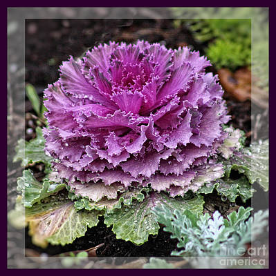Photograph - Ornamental Purple - Flower Art by Ella Kaye Dickey