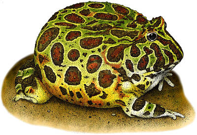 Photograph - Ornate Horned Frog by Roger Hall