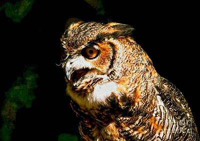 Photograph - Angry Owl by Femina Photo Art By Maggie