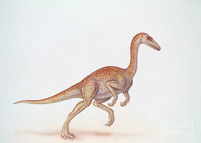Photograph - Ornithomimus by Carlyn Iverson