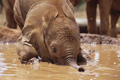 Photograph - Orphan Isholta Playing In Mud Bath by Gerry Ellis