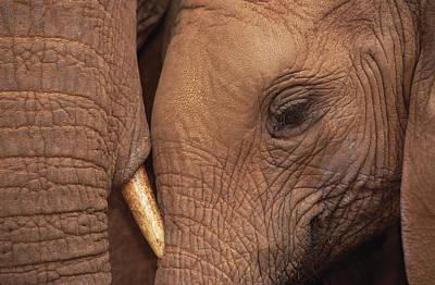 Elephant Photograph - Orphans Malaika And Natumi Tsavo Kenya by Gerry Ellis