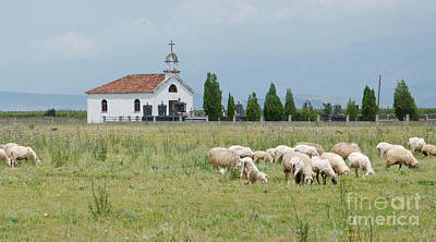 Photograph - Orthodox Church And Sheep - Montenegro by Phil Banks