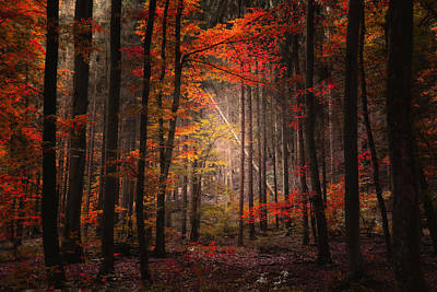 Art Print featuring the photograph Orton Forest by Philippe Sainte-Laudy