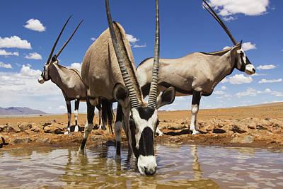 Oryx At Waterhole Namibrand Nature Print by Theo Allofs