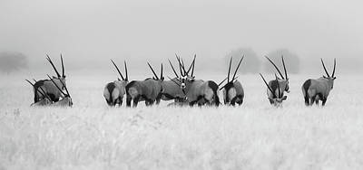 Wild Animals Photograph - Oryx In The Rain by Kirill Trubitsyn