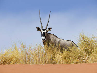 Photograph - Oryx Namibia by Alexander Koenders