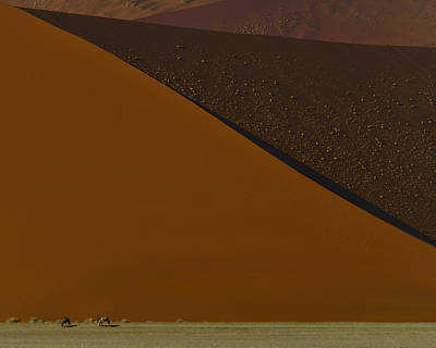Photograph - Oryx On The Edge by Tony Beck