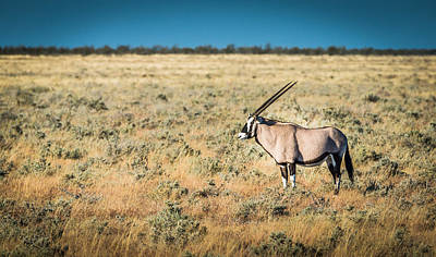 Horned Drawing - Oryx Profile - Color Oryx Photograph by Duane Miller