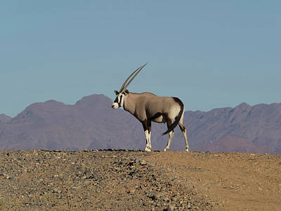 Namib Naukluft National Park Photograph - Oryx Standing On A Hill, Namib-naukluft by Panoramic Images