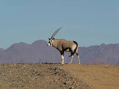 Oryx Standing On A Hill, Namib-naukluft Art Print