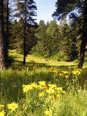 Photograph - Osha Trail Meadow Cloudcroft New Mexico by Kurt Van Wagner