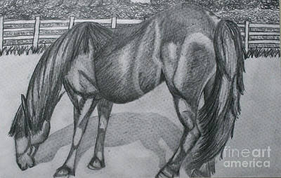 Drawing - Osk by Cecilia Stevens