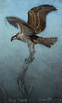 Hawk Birds Digital Art - Osprey by Aaron Blaise
