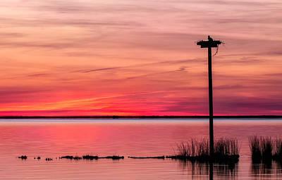 Osprey Nest Silhouette Photograph - Osprey At Sunset by Cindy Archbell