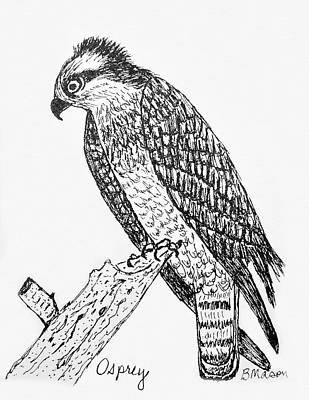 Osprey Drawing - Osprey by Becky Mason