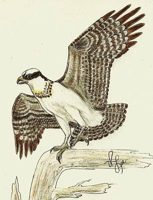 Drawing - Osprey Drawing by VLee Watson