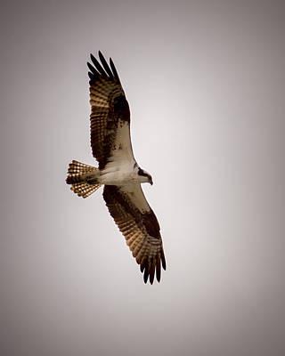 Osprey Photograph - Osprey by Ernie Echols