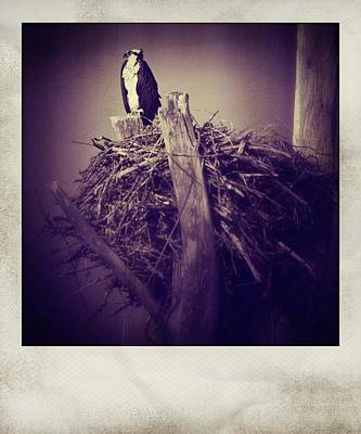 Guns Arms And Weapons - Osprey Guarding Nest Polaroid by Bradley R Youngberg