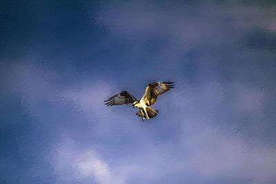 Painting - Osprey In Flight by John Haldane