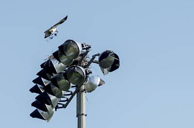 Photograph - Osprey In The Lights by Steve Atkinson