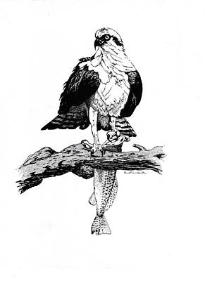 Osprey Drawing - Osprey by J W Kelly