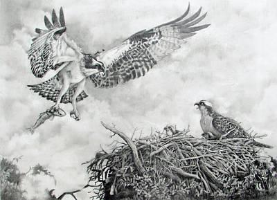 Painting - Osprey Lovers Key Florida by Richard Devine