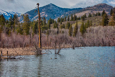 Wa Painting - Osprey Nest In A Beaver Pond by Omaste Witkowski