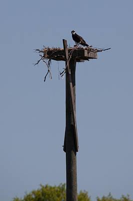 Elmira Ny Photograph - Osprey Nest by Richard LaVere