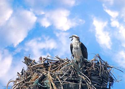Photograph - Osprey On Nest by David Rich