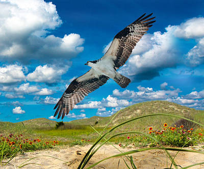 Avian Digital Art - Osprey On Shackleford Banks by Betsy Knapp