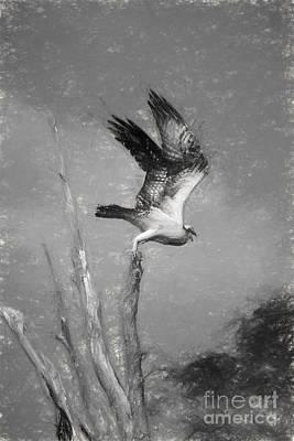 Osprey Digital Art - Osprey On The Hunt by Heidi Piccerelli