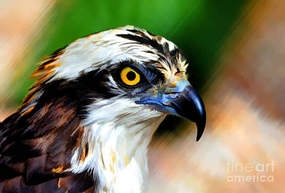 Art Print featuring the photograph Osprey Portrait by Dan Friend