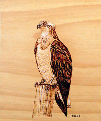 Pyrography - Osprey by Ron Haist