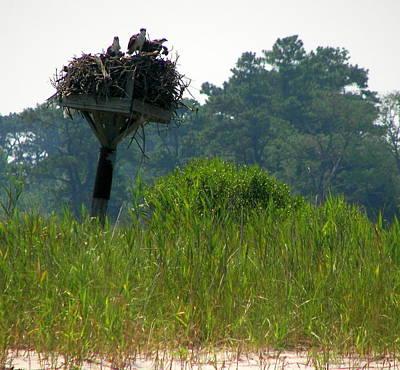 Photograph - Osprey Waiting For Dinner by Pamela Hyde Wilson