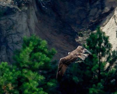 Osprey Digital Art - Osprey With Fish by Ernie Echols