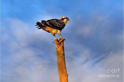 Photograph - Osprey's Morning Catch by Elizabeth Winter