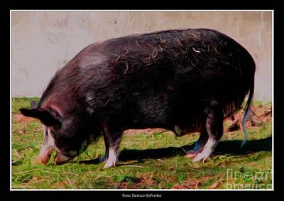 Animals Photograph - Ossabaw Island Pig With Oil Painting Effect by Rose Santuci-Sofranko