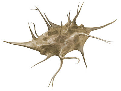 Photograph - Osteocyte, Illustration by QA International