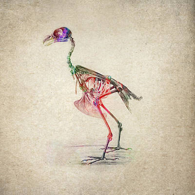 Bird Skeleton Digital Art - Osteology Of Birds by Aged Pixel