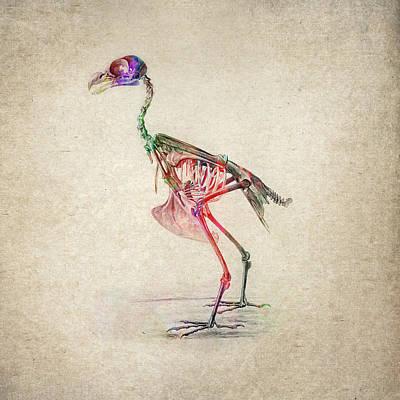 Animals Digital Art - Osteology of birds by Aged Pixel