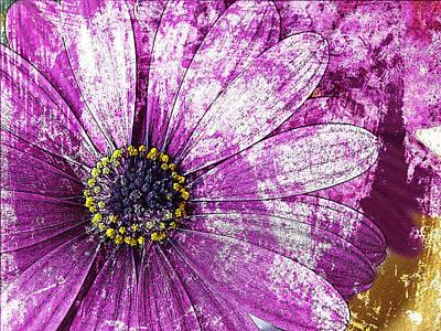 Photograph - Osteospermum by David Pantuso