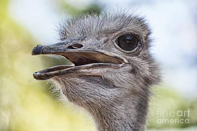 Ostrich Photograph - Ostrich Bokeh V2 by Douglas Barnard