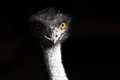 Ostrich Photograph - Ostrich by Daniel Kocian