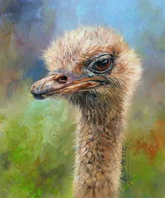 Ostrich Wall Art - Painting - Ostrich by David Stribbling