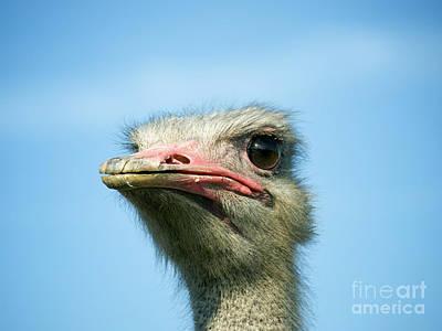 Ostrich Photograph - Ostrich Face by Sinisa Botas